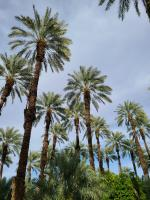 Shields Dates in Indio, CA - Traveling around CA over President's Day Weekend 2021