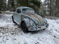 1959 beetle rescue