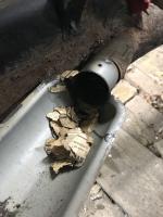 52 Split Beetle