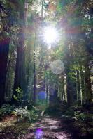 redwoods 2021