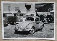 Damaged Bayreuth Beetle