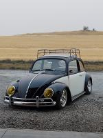 60' ragtop beetle