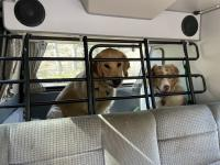 Dogs in van