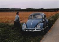 Blue Ragtop Beetle