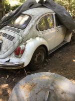 1972 bug