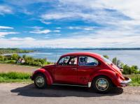 1984 Mexican Beetle