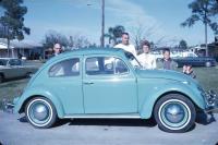 Turquoise Ragtop Beetle
