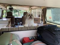 Camping with pup