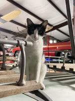 Felix the Cat on the Westy rack