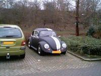 Black Aggresive Beetle