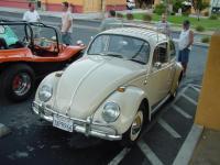 Bud's beetle