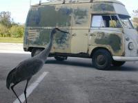freaky bird