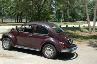 My First Beetle