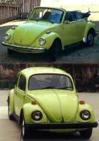 My Ravennia Green Beetles