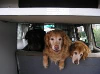 dog in vanagon