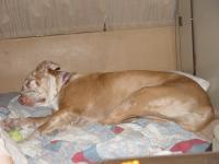 daisy sleeping in the vanagon