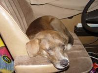 sally sleeping in the vanagon