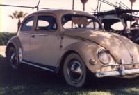 Oval Beetle