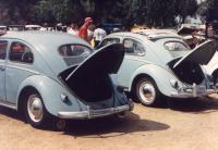 Oval Beetles
