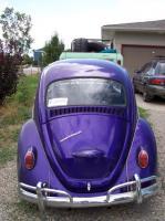 Six T Seven's bug