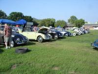 Row of Beetles