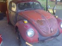 calico bug