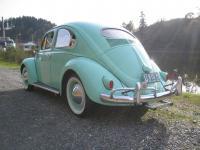 56 bug
