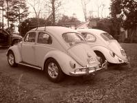 The bad beetles