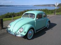 56 beetle