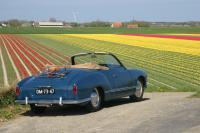 Ghia and Tulips