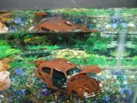 Fishtank Herbie 2