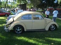 oval bug