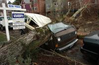 Vanagon and tree in unhappy union