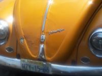 Puetta Vallaerta beetle5