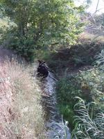 Cow cooling down in a melioration ditch