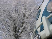 Winter shoot, dec. 21 2007