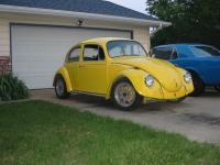 Indiana Bug!