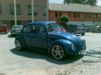 Hungaryan Bug