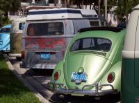 Palmetto Bugs Sunday