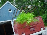 hauling my favorite plant...