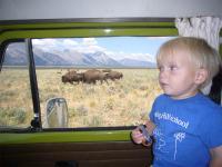 Buffalos and Bays