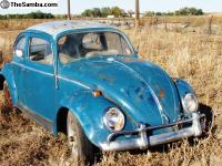 64 field bug