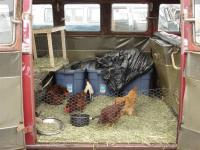 Fresh Eggs Split Bus at OCTO 2005
