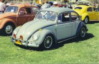 Another Beetle