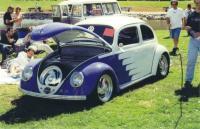Scalloped Beetle