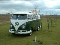 67 Westy in the orchard