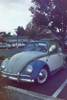 my65 bug