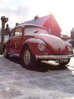 Snow Covered Beetle
