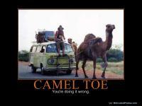 Camel Powered Bay