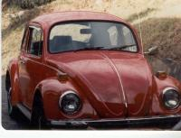 74  bug    in Spruce Pine, NC